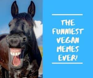 vegan memes funny