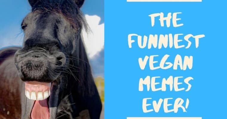 21 of the Funniest Vegan Memes Ever!