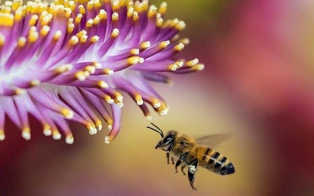 Is Honey Vegan? | Why Is Honey Not Vegan?
